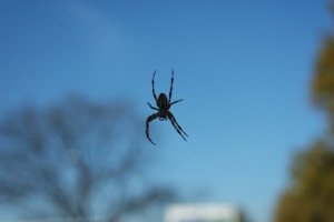 Spinne fast ohne Netz